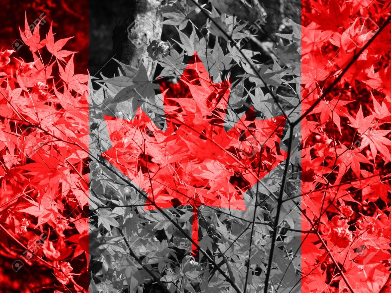 Drapeau Du Canada Drapeau Canada En Fond D Ecran Erable D Automne Banque D Images Et Photos Libres De Droits Image 51466984