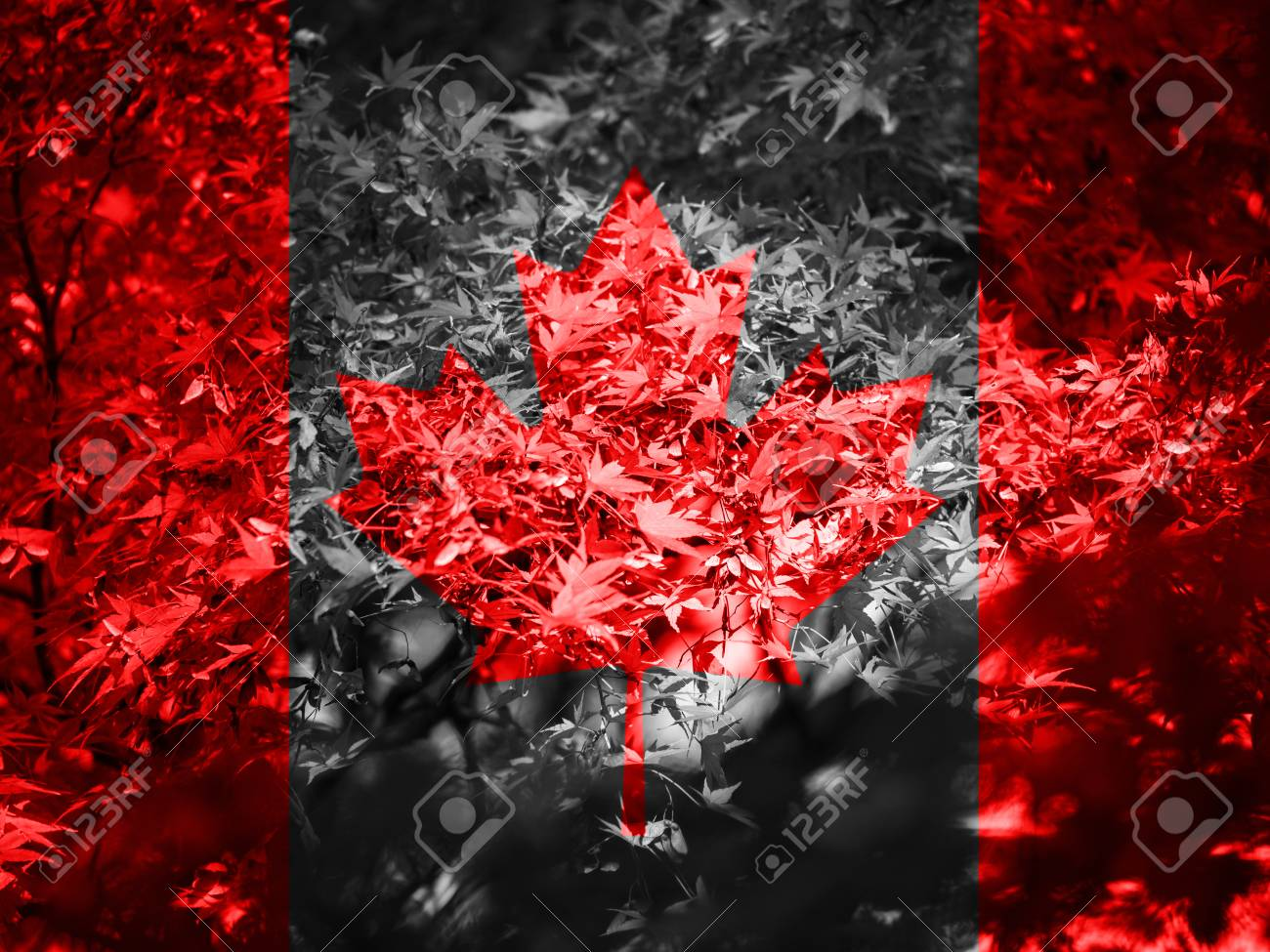 Flag Of Canada Canada Flag In Autumn Wallpaper Maple