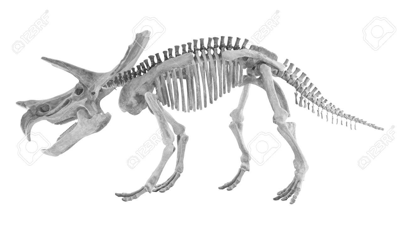 Triceratops And Styracosaurs Bone Toy On White Background Stock