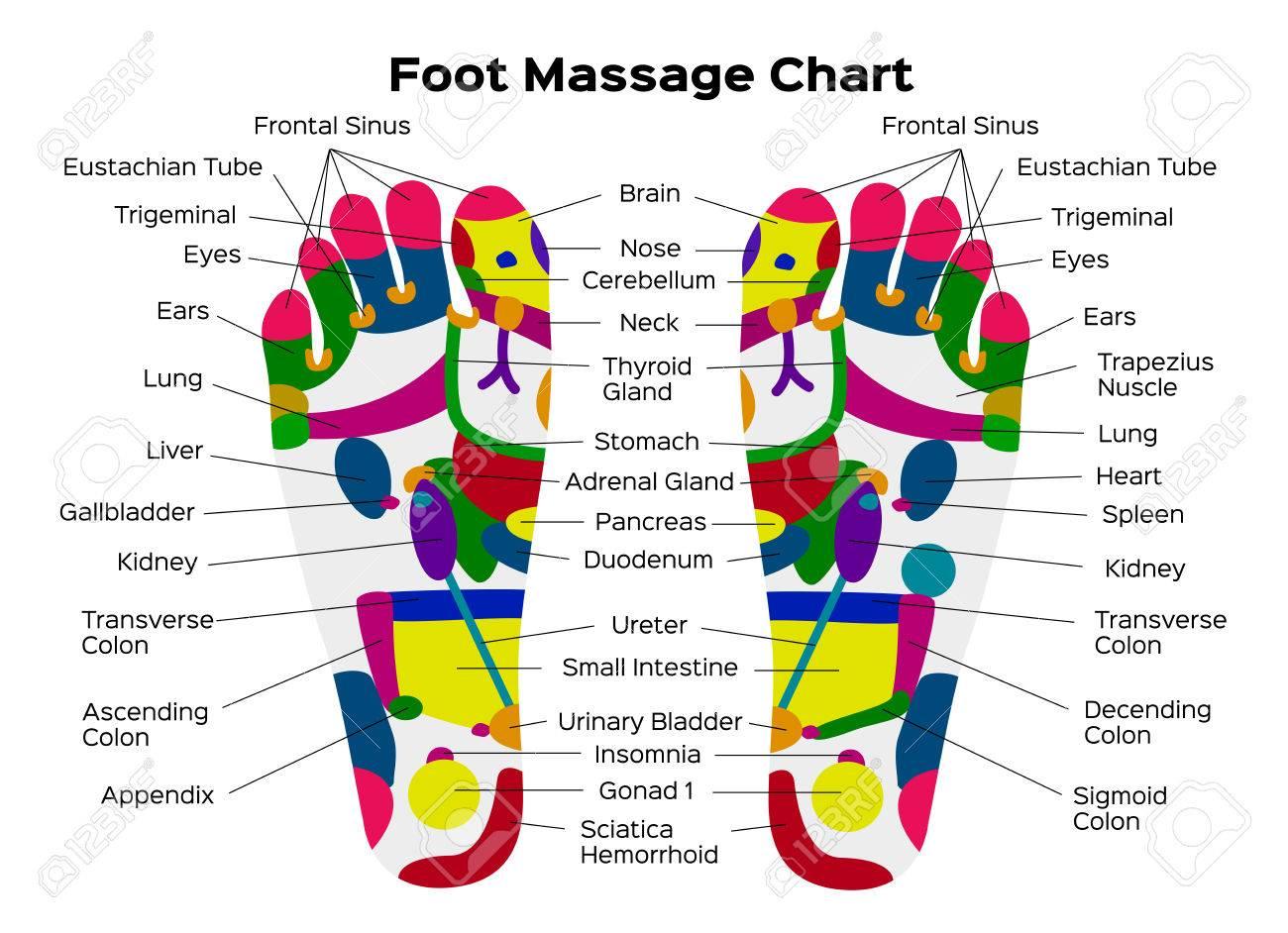 Vektorgrafik Illustration: Fußreflexzonenmassage Diagramm Mit ...