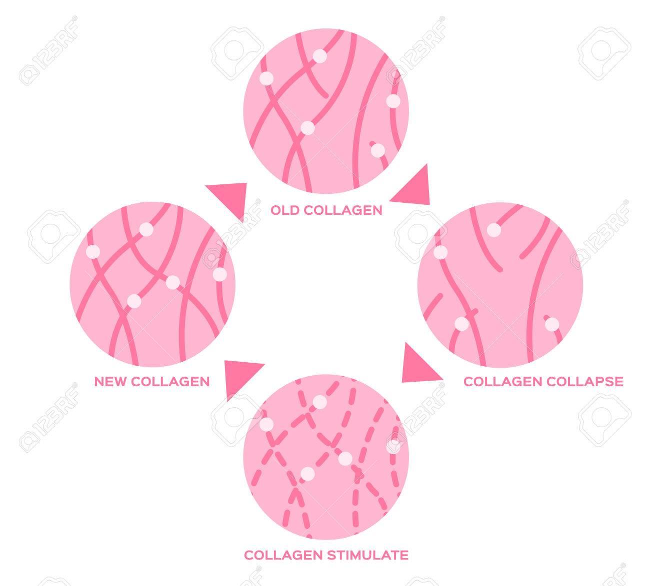 collagen life