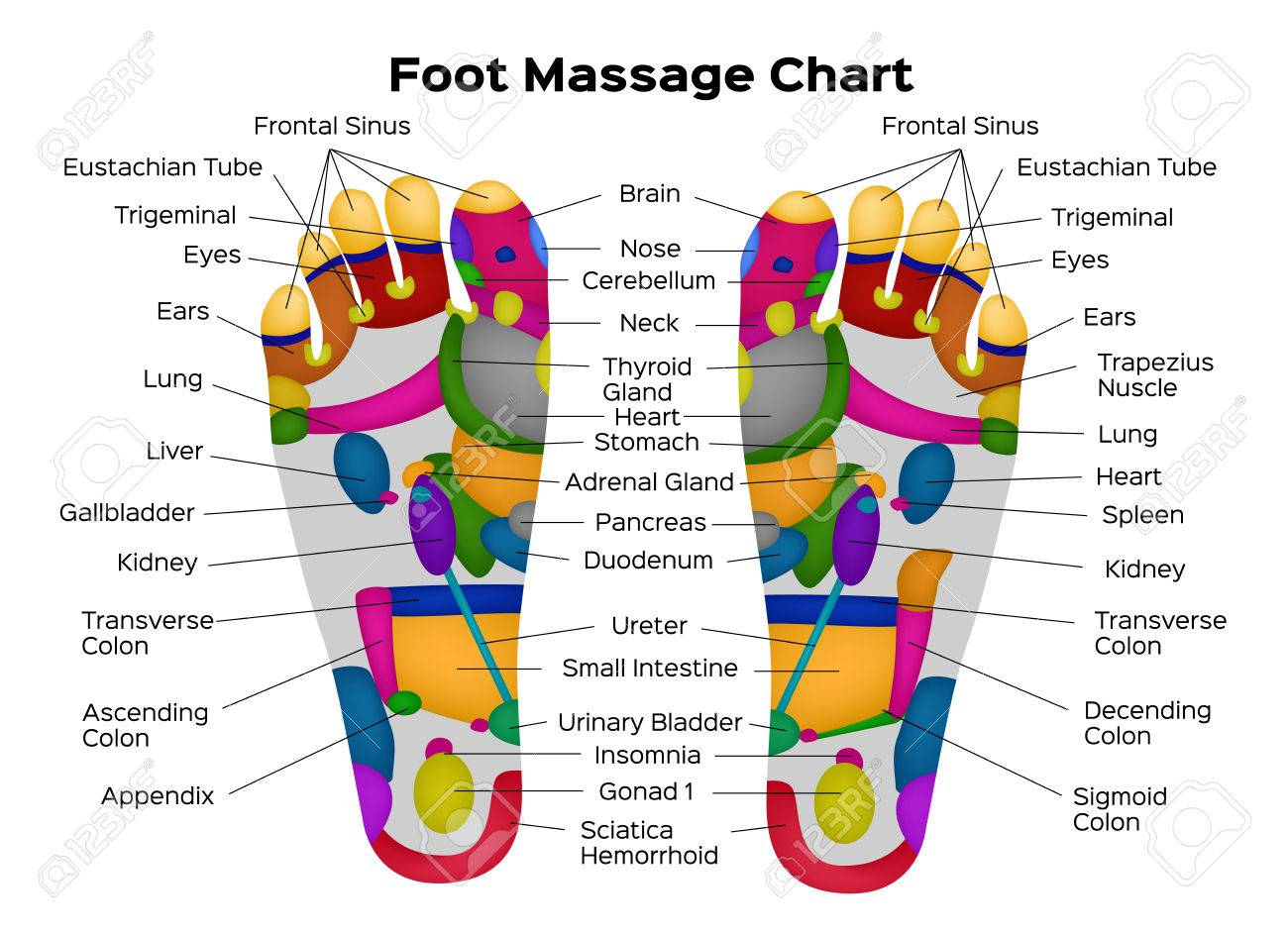 Foot Reflexology Chart With Description Of The Internal Organs ...