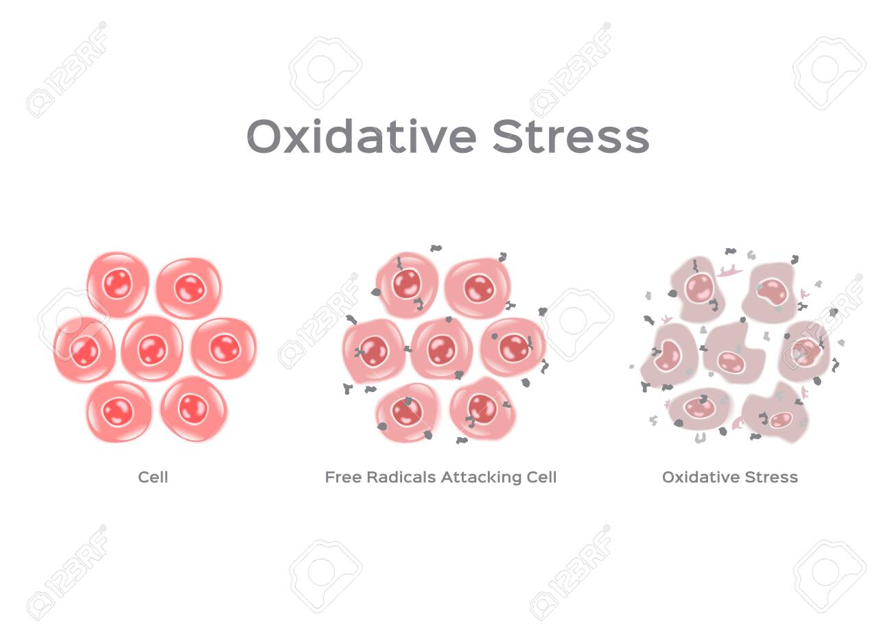 Oxidative Stress cell vector / free radical - 126729562