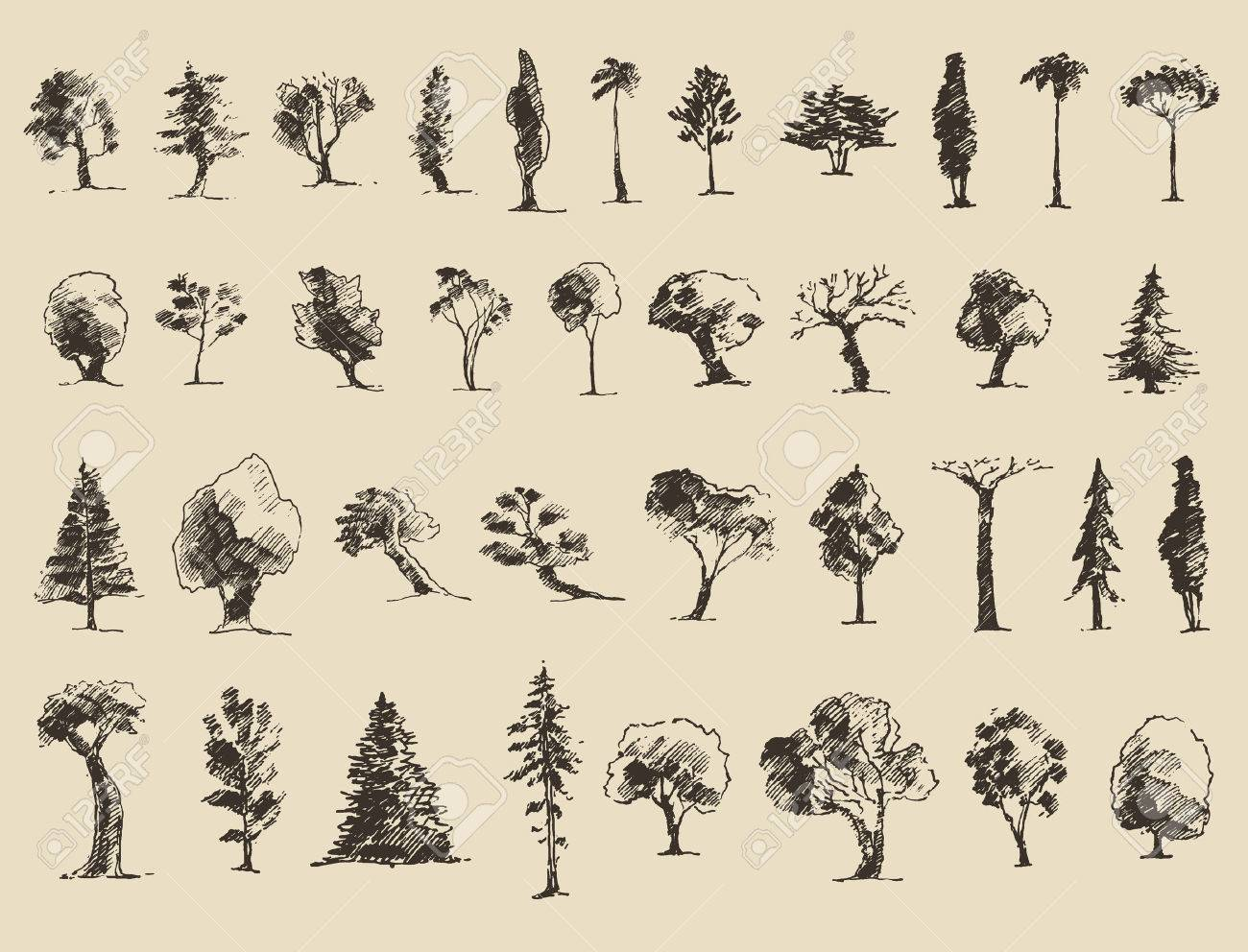 Trees sketch set vintage vector illustration engraved style trees sketch set vintage vector illustration engraved style hand drawn stock vector thecheapjerseys Gallery