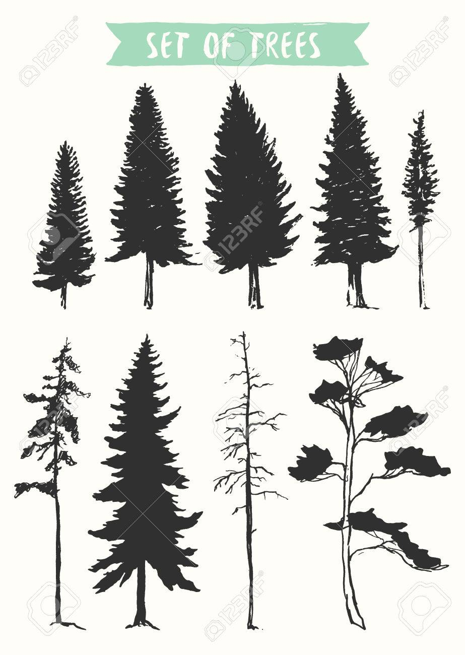Hand drawn vector silhouette of pine and fir trees - 55752143
