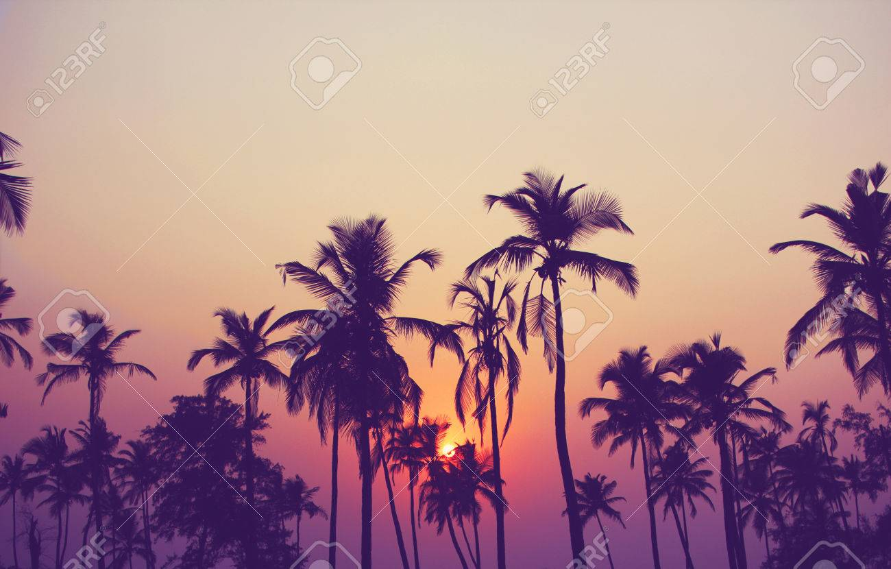 Silhouette of palm trees at sunset vintage filter - 60634246