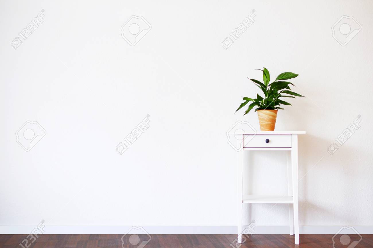 Intérieur Propre Moderne Avec Support Et Plante Sur Fond De Mur