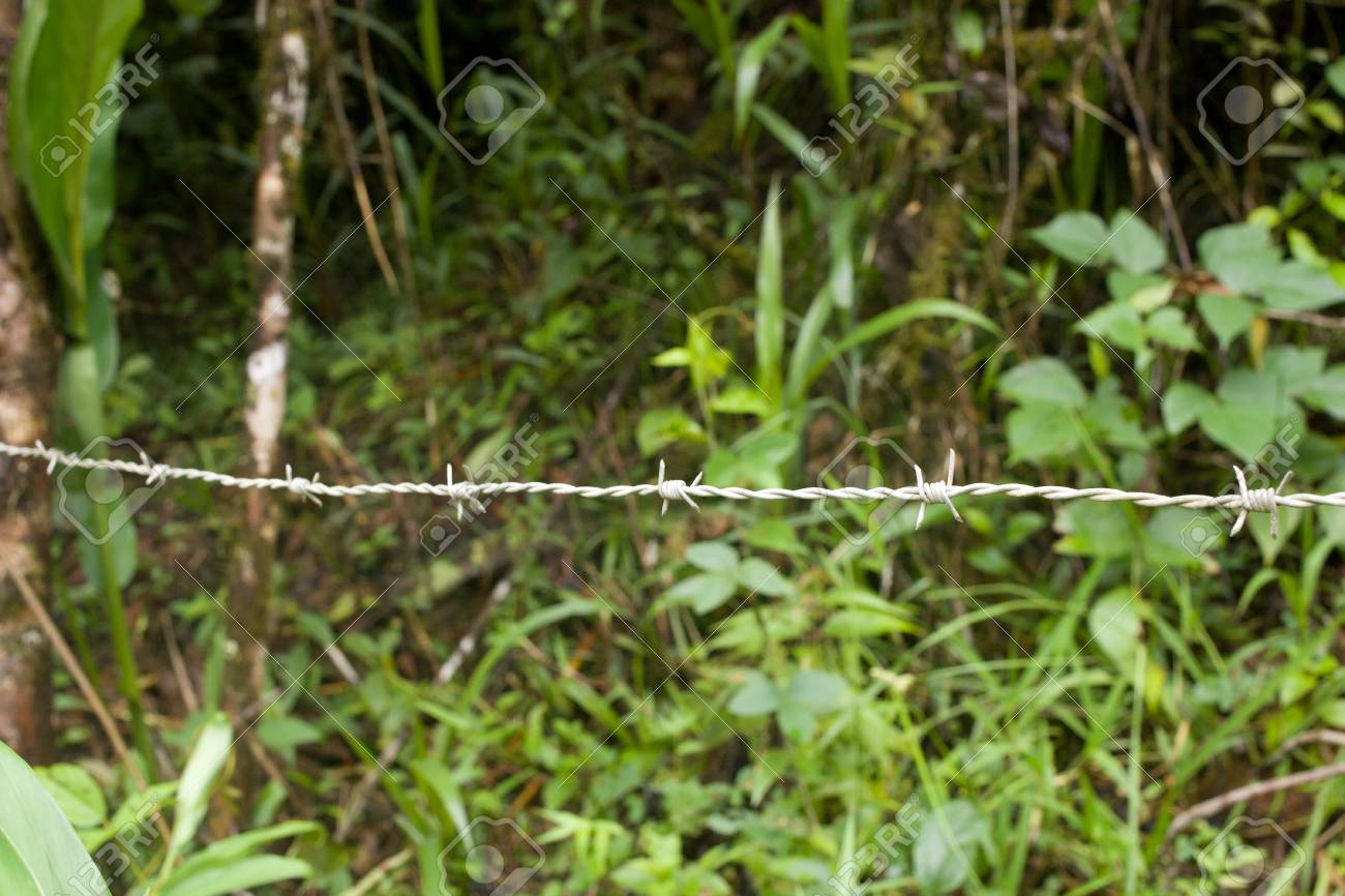 closeup of a barbed wire fence with greenery in the background Stock Photo - 17132228