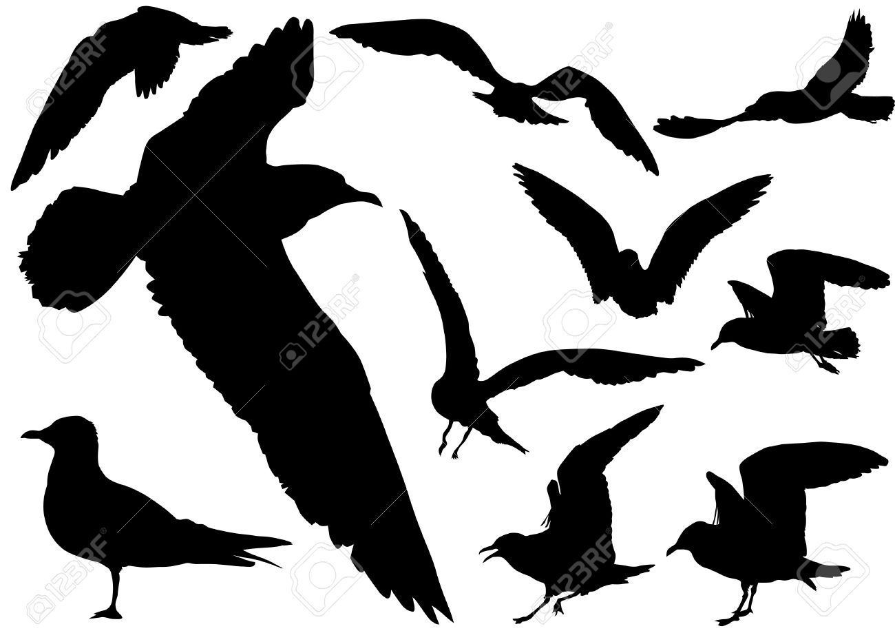 flock of seagulls images u0026 stock pictures royalty free flock of