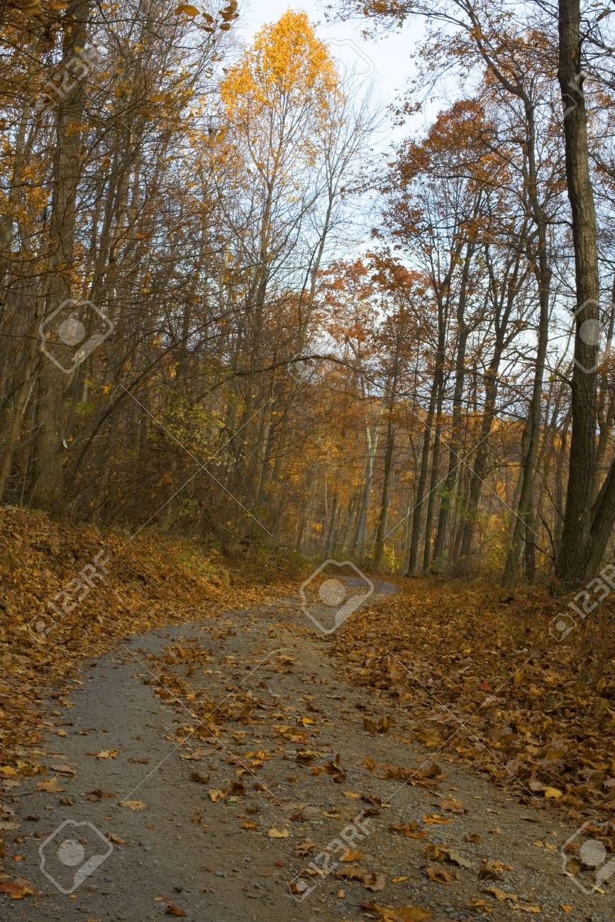 back road winding through a forest in the fall Stock Photo - 3896581