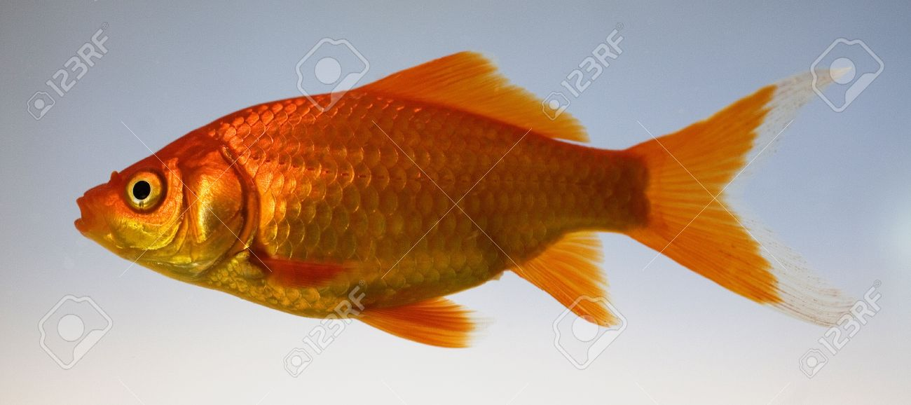 image animaux qui nagent