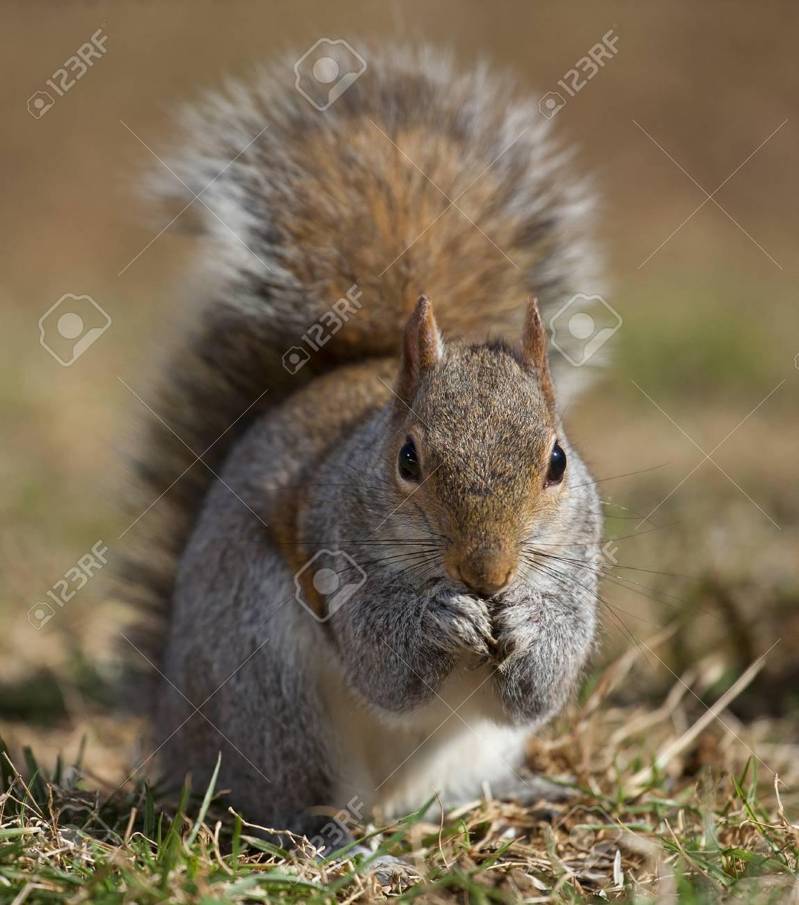 Eichhörnchen, die echt aussehen