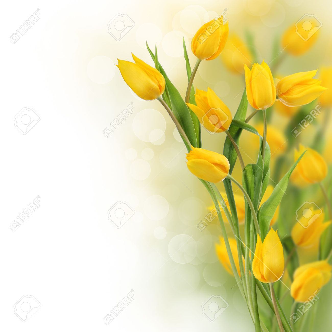 tulip flowers border with copy space stock photo, picture and, Beautiful flower