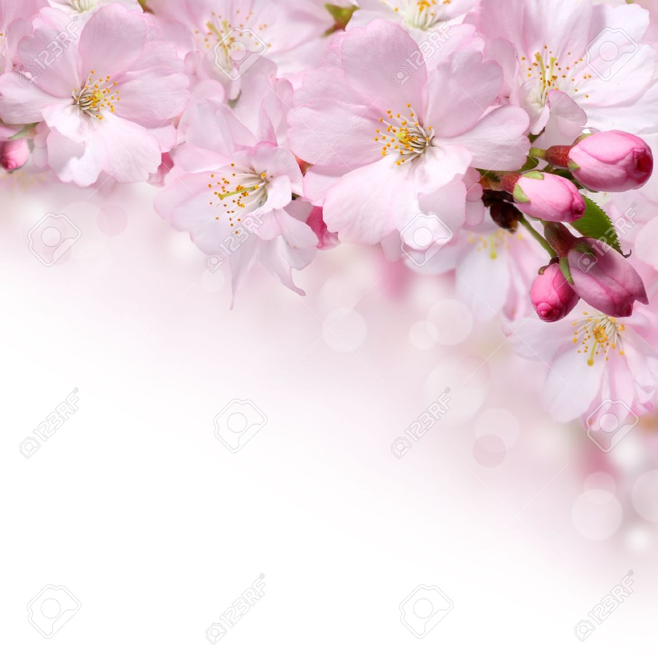 Pink Spring Flowers Design Border Background Stock Photo Picture