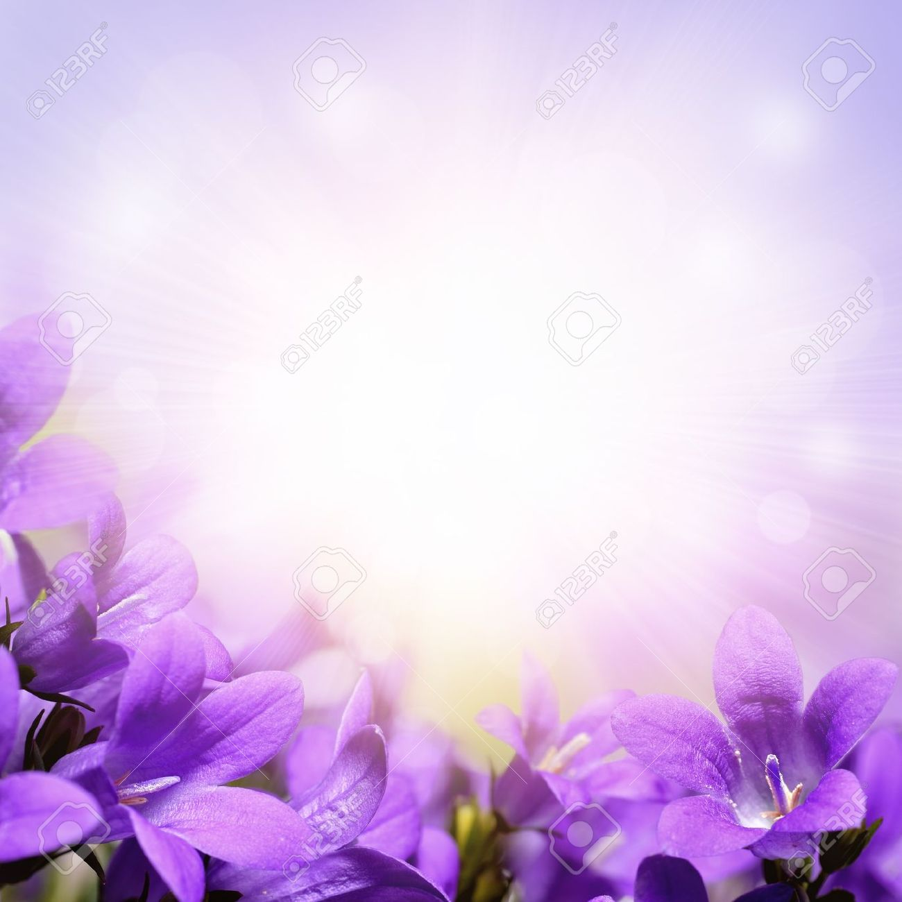 purple flower background design