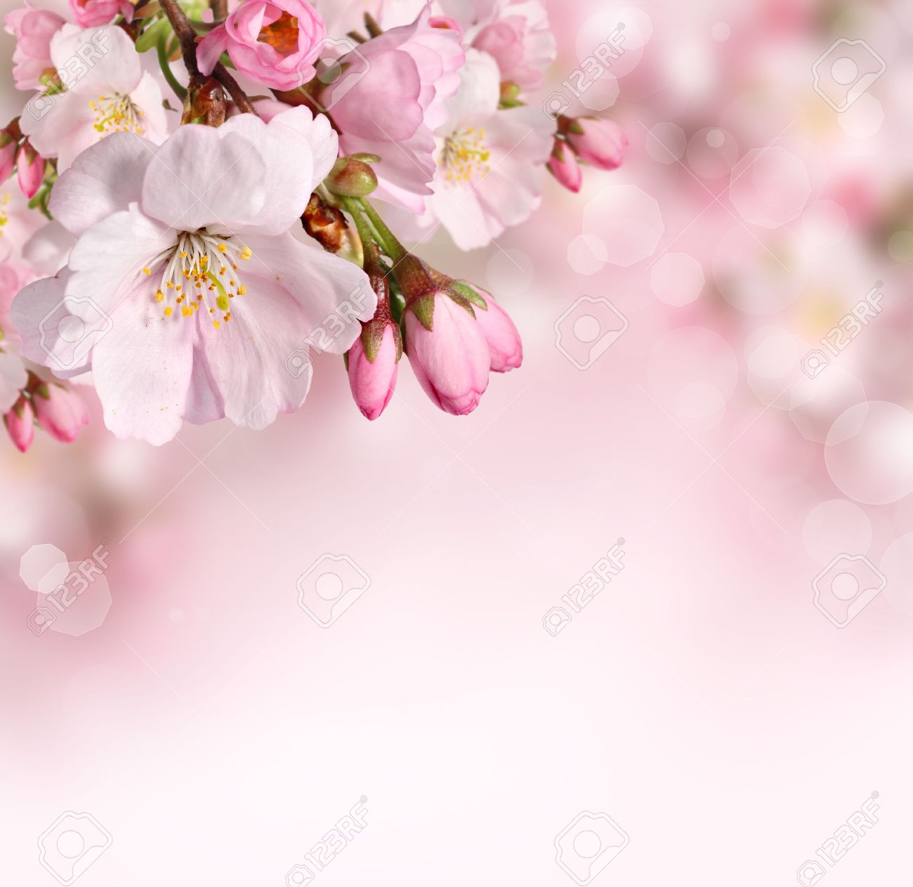 Spring Flowers Background With Pink Blossom Stock Photo Picture And