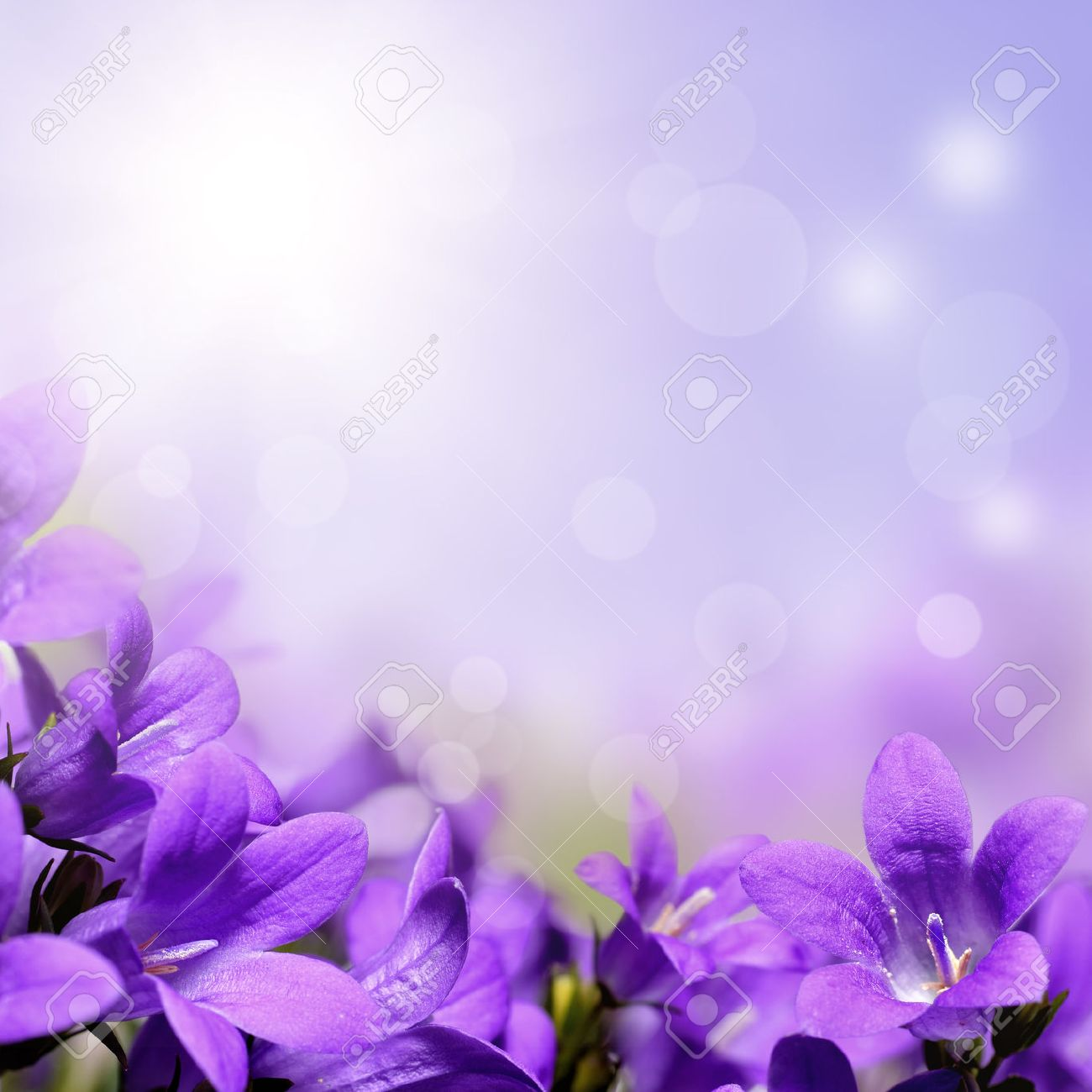 Abstract Purple Spring Flowers Background Stock Photo Picture And