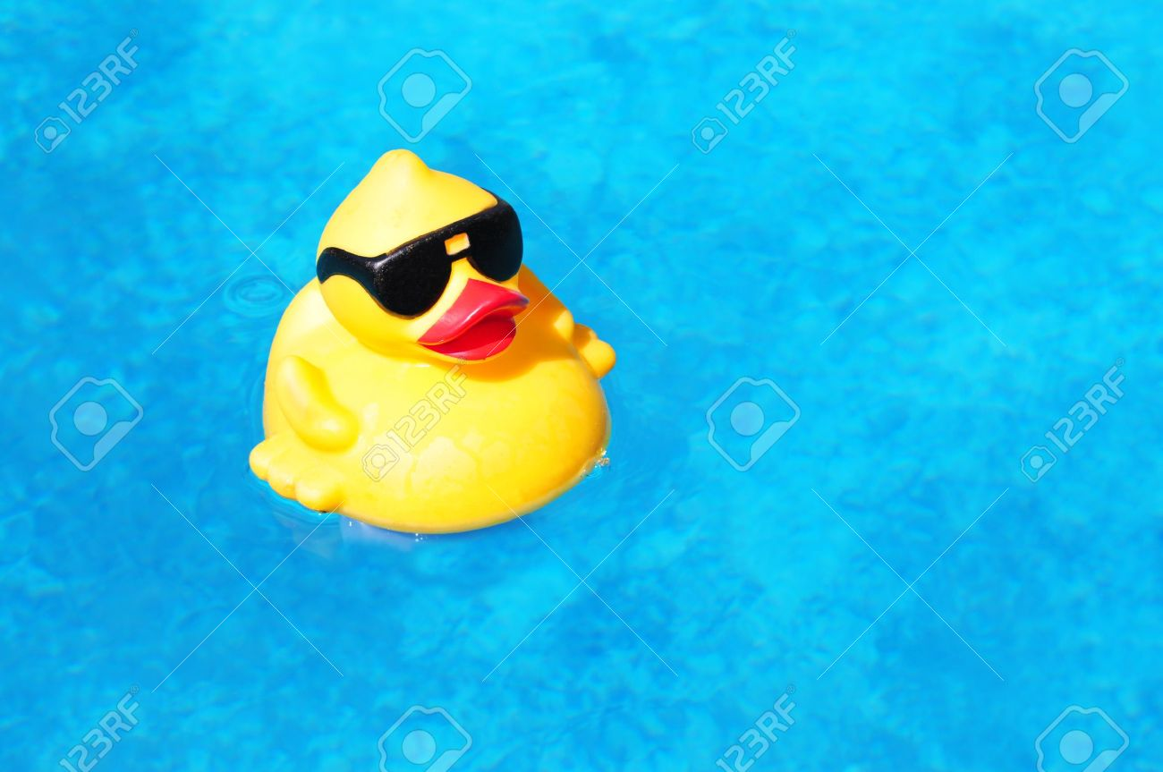 rubber yellow duck floating inside a swimming pool stock photo