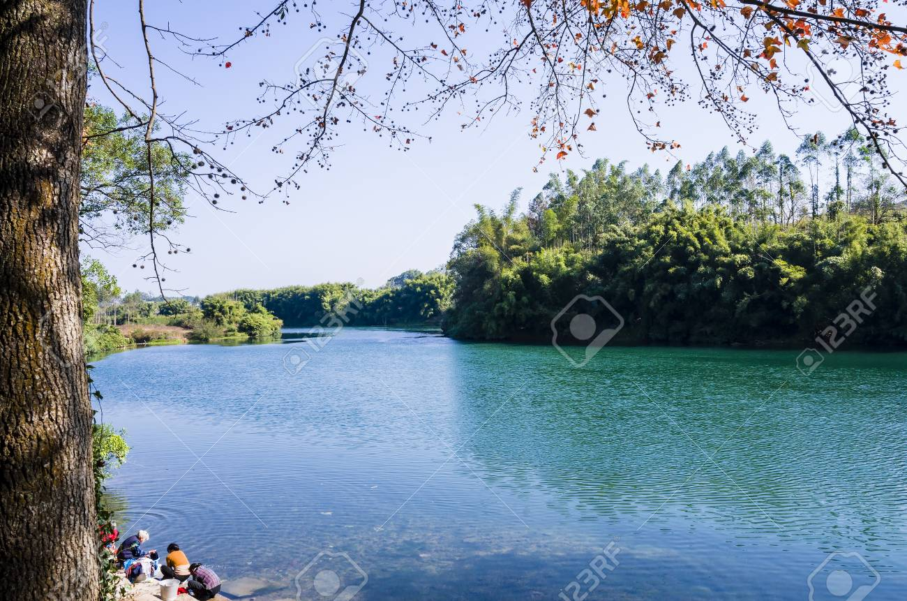 The azure River and the ancient camphor tree in winter