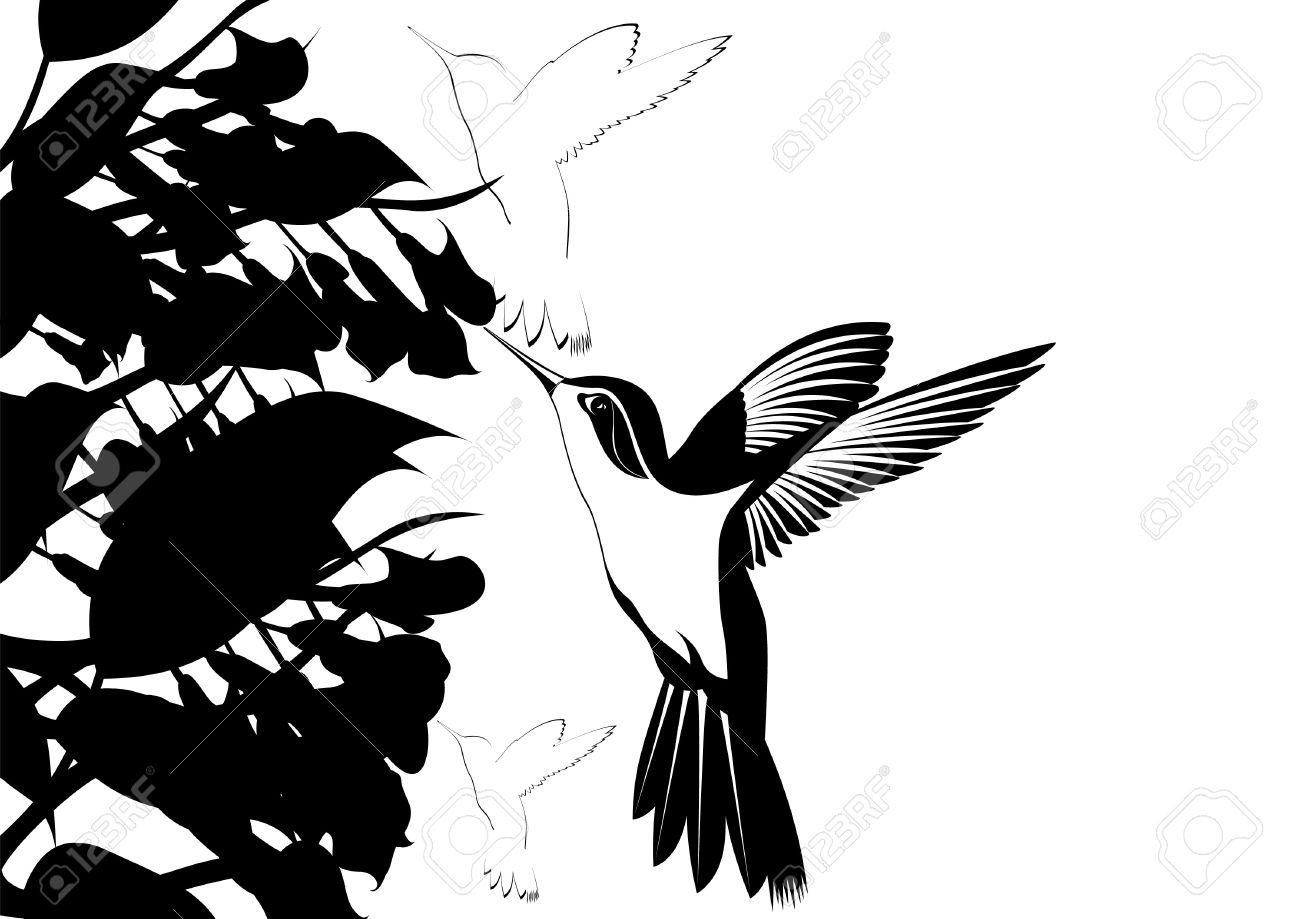 Colibríes Alrededor De Las Flores Ilustración En Blanco Y Negro