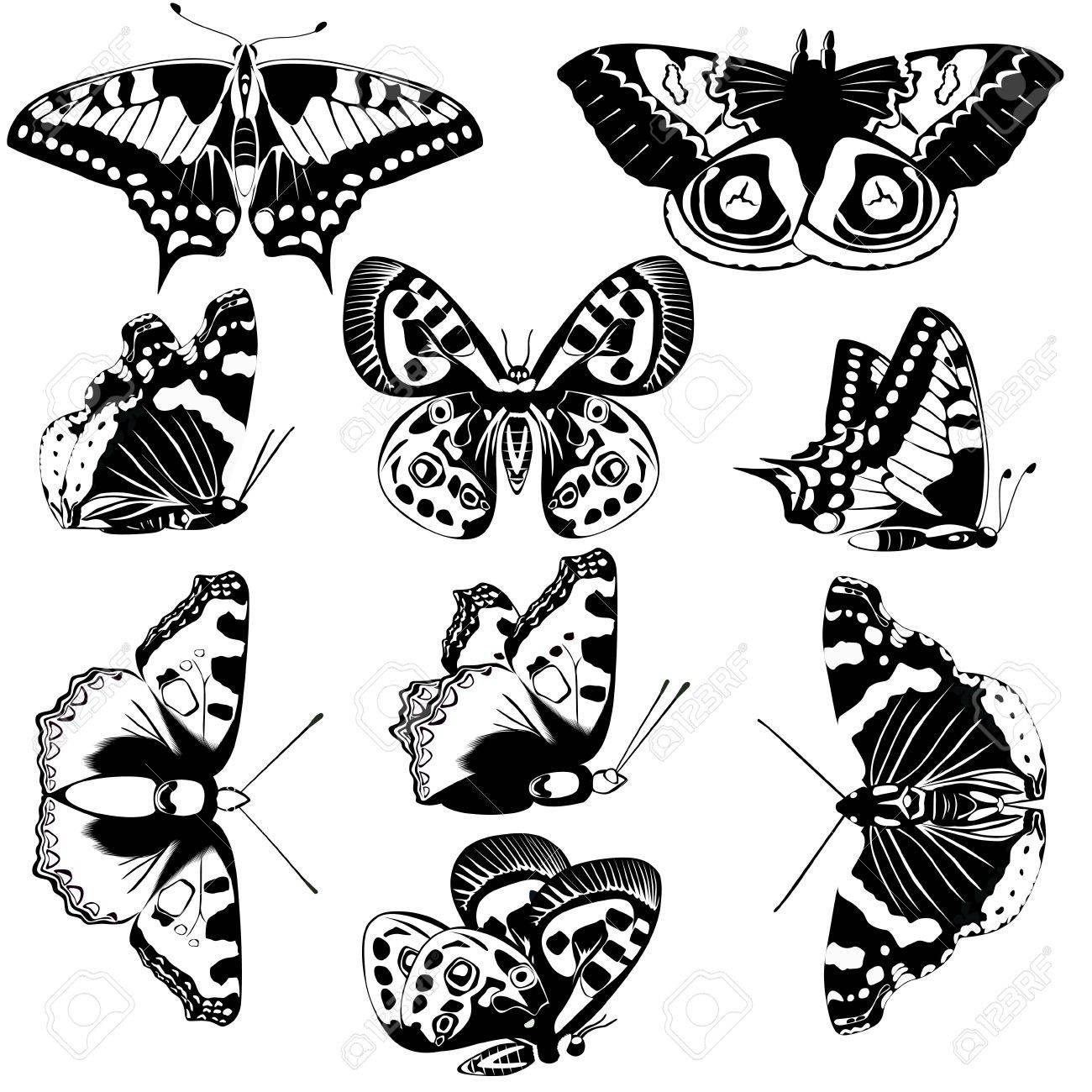 The contours of butterflies  Black and white illustration Stock Vector - 14523689
