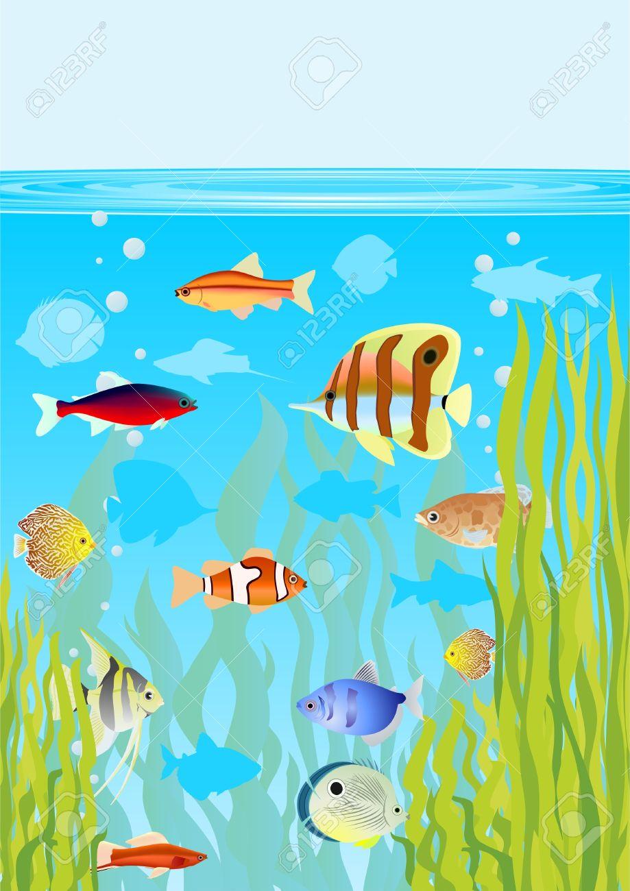 Fish tank drawing pictures - Aquarium Fishes In Their Natural Habitat Stock Vector 20630454