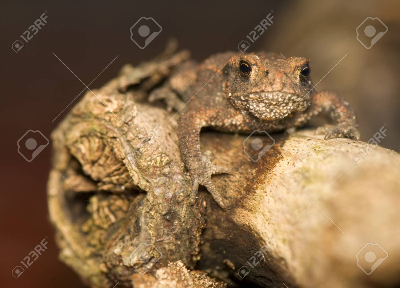 Toad Stock Photo - 10334510