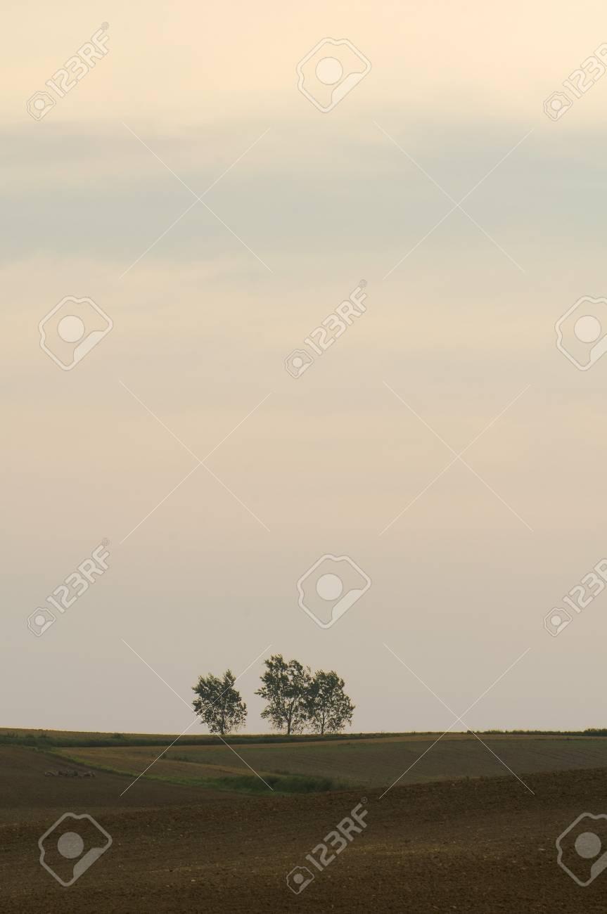 Empty field and three trees Stock Photo - 10334463