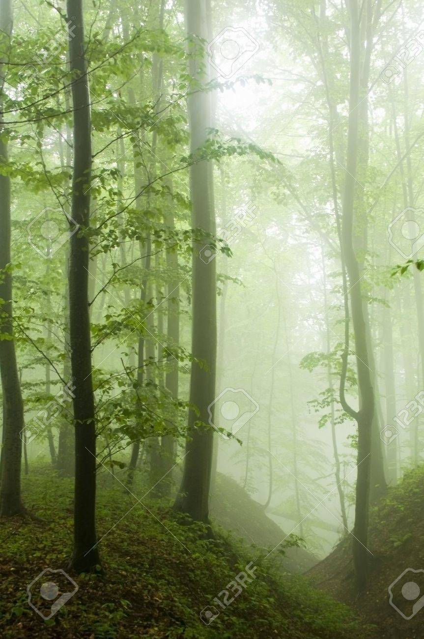 Beech forest in the summer after the storm Stock Photo - 10334539