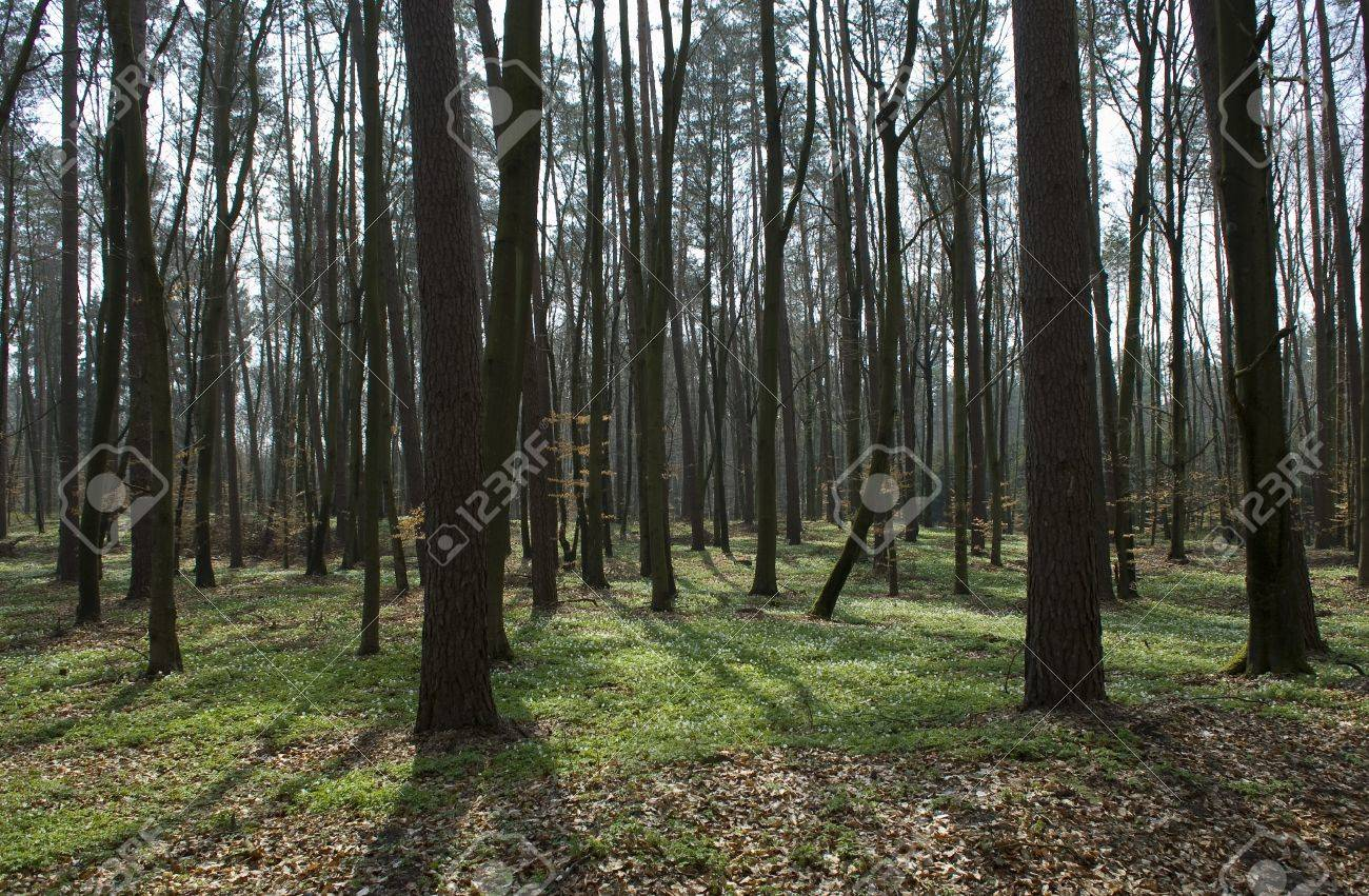 Spring forest Stock Photo - 13360245