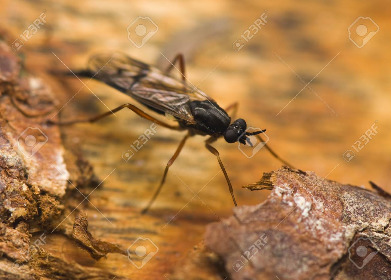 Ichneumonidae Stock Photo - 13406943