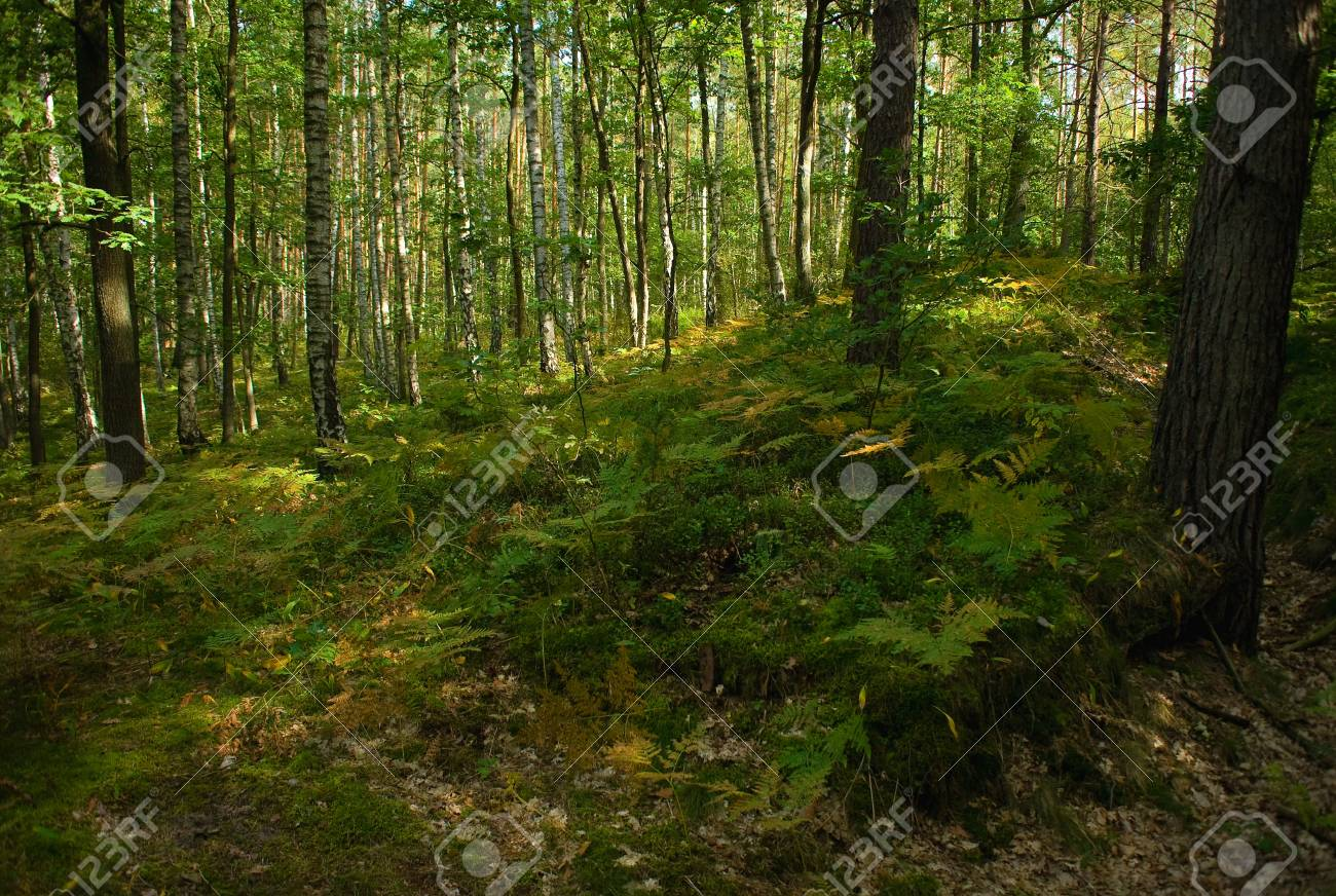Forest Stock Photo - 15329845