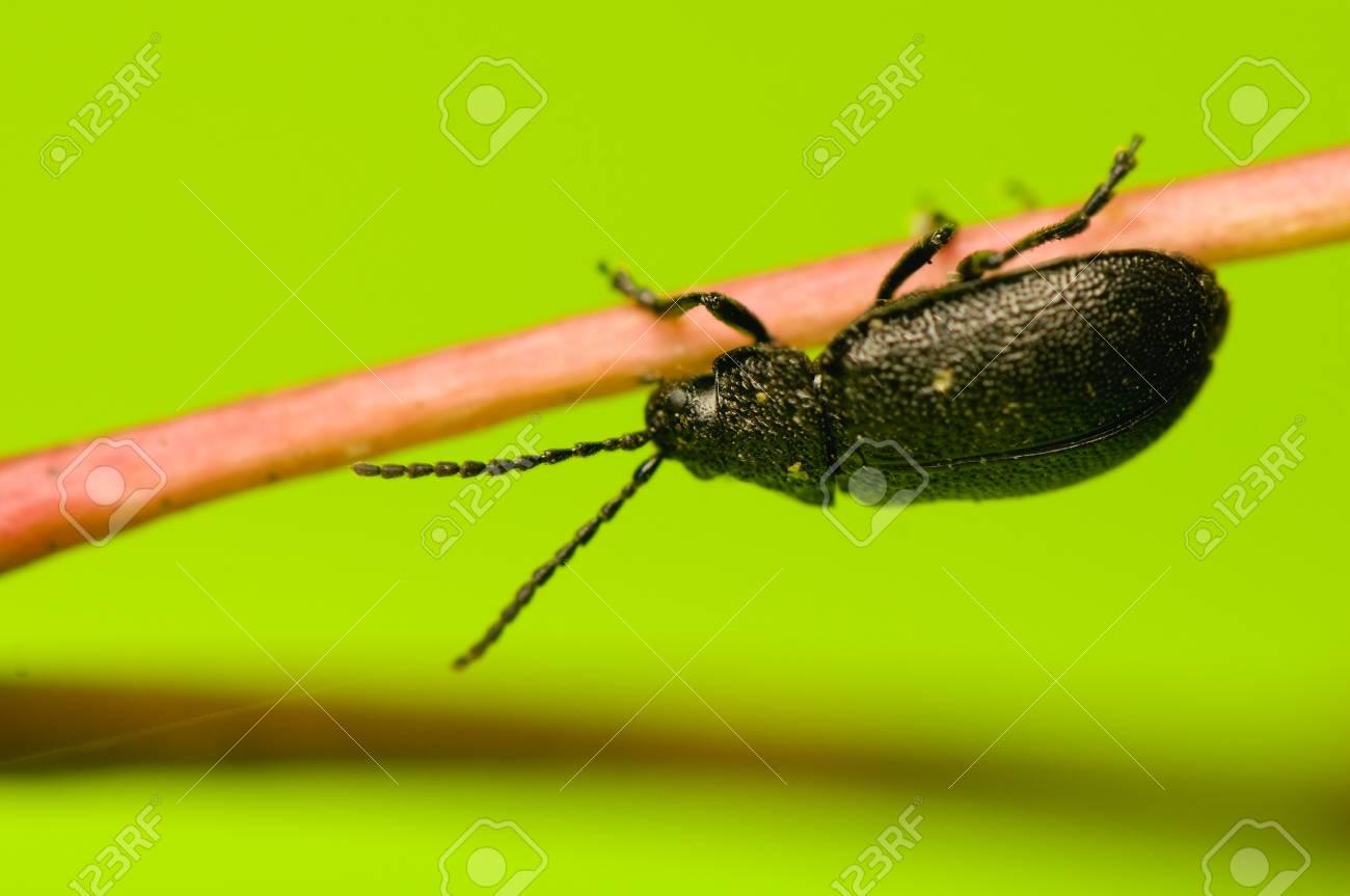 Beetle Stock Photo - 15758013