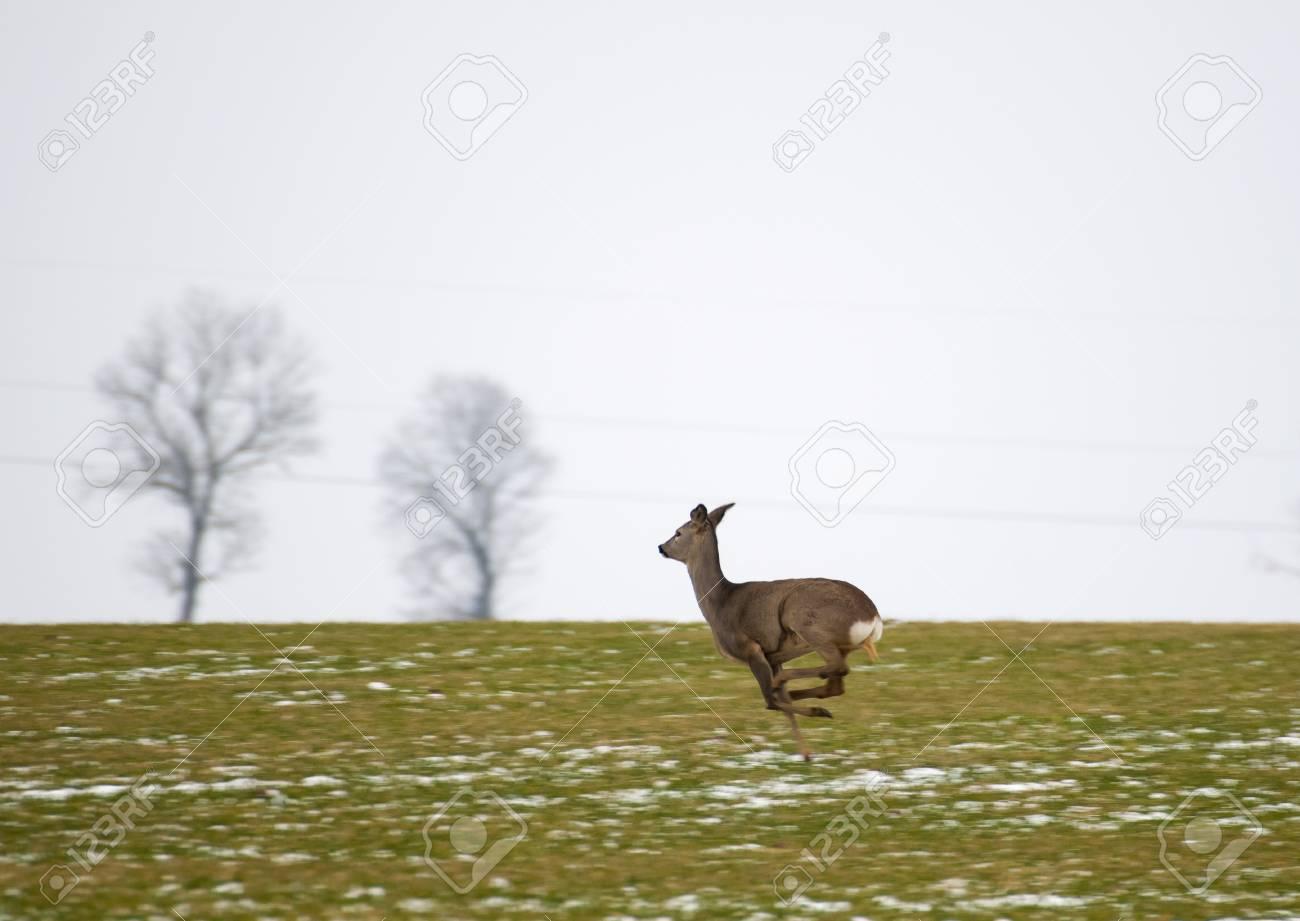 Herd of deer Stock Photo - 17874674