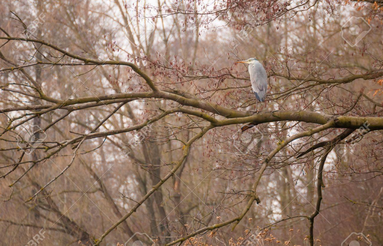 Heron Stock Photo - 18930369