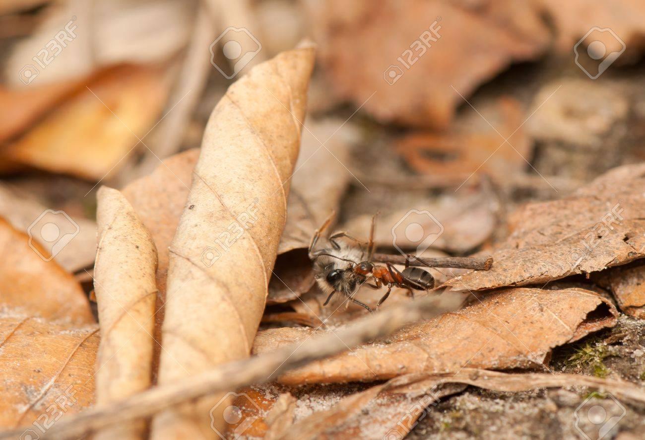 Ant Stock Photo - 19186956