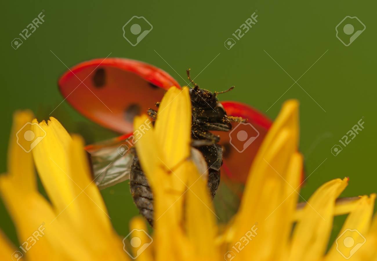 Ladybug Stock Photo - 19825811