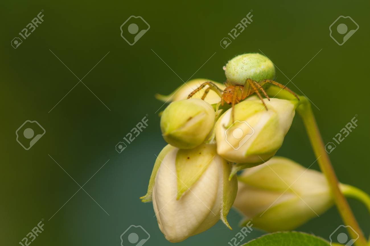 Araniella cucurbitina Stock Photo - 20167650