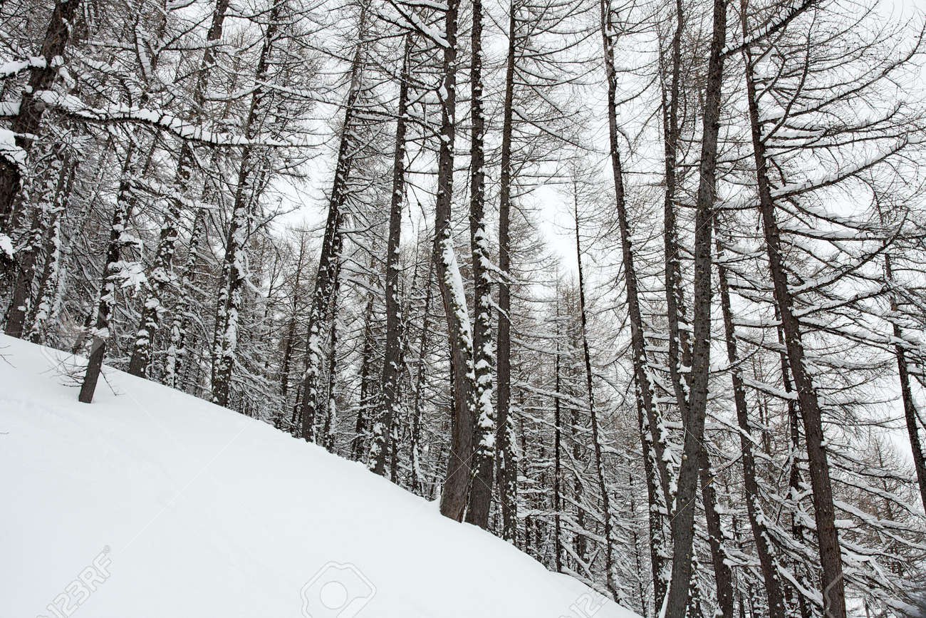 Winter forest with lots of fresh snow Stock Photo - 5568096