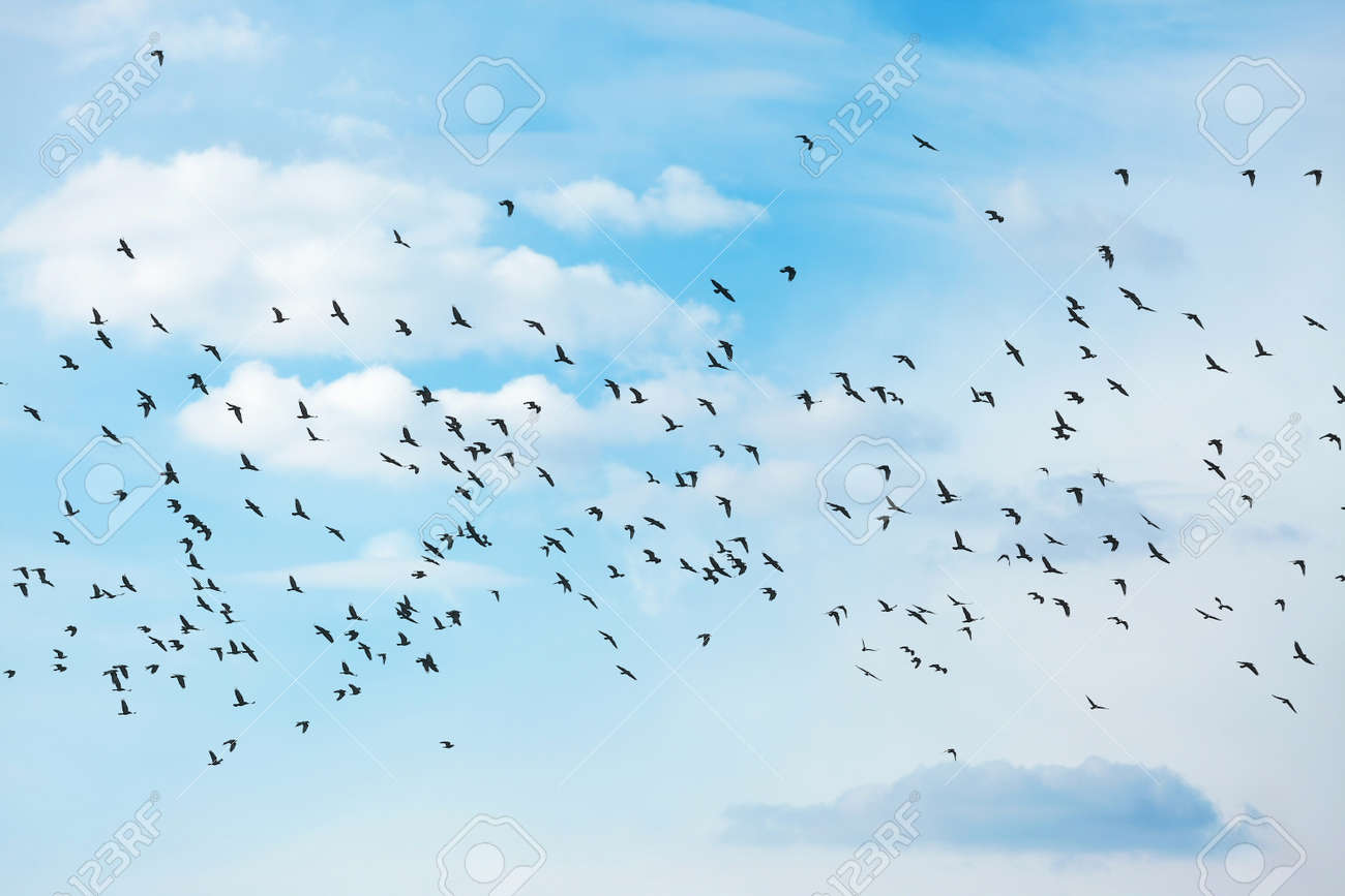 many birds flying in the sky stock photo picture and royalty free