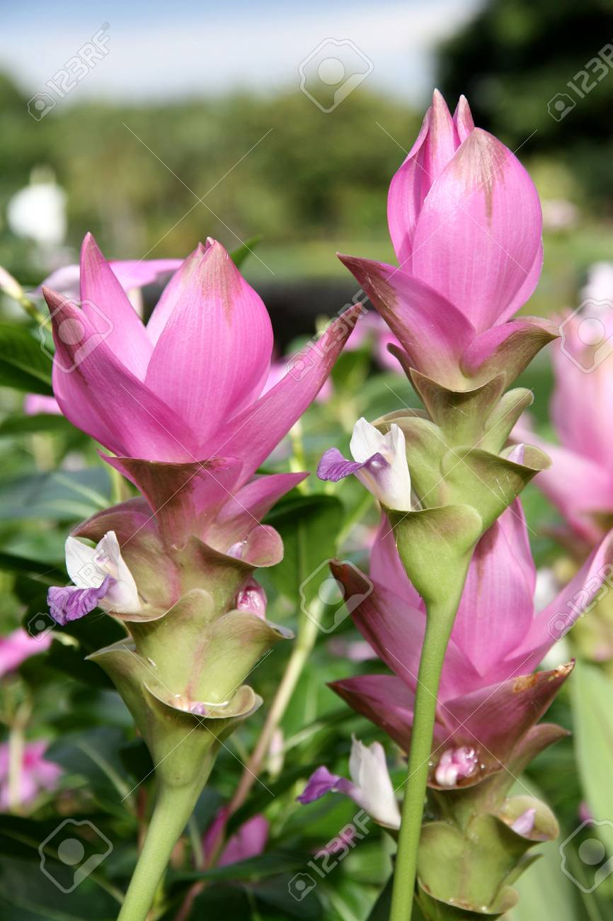 pink flower Stock Photo - 7620220