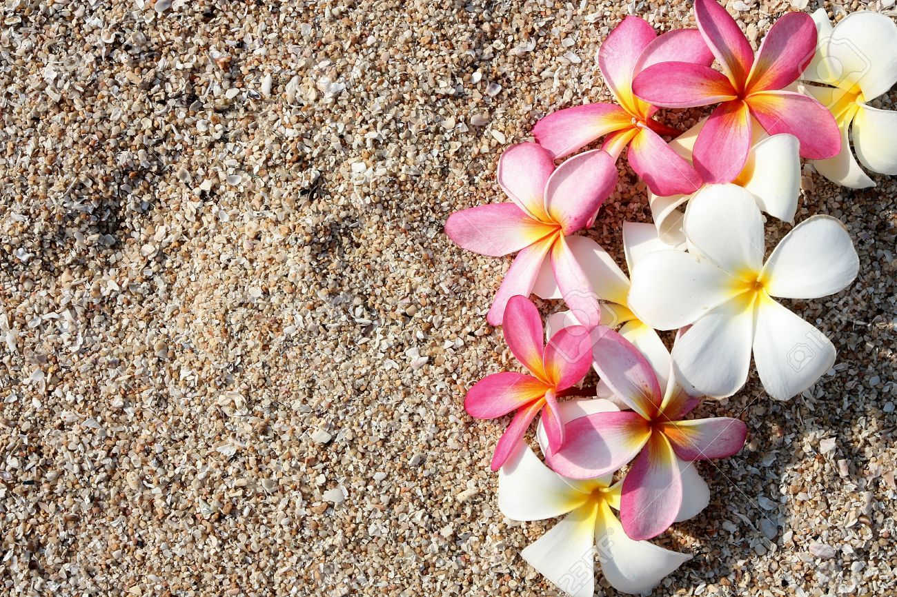 Pink Leelawadee Flower On The White Sand Stock Photo Picture And