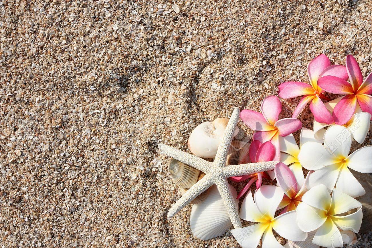 Fleur étoile De Mer Et Leelawadee Sur Le Sable