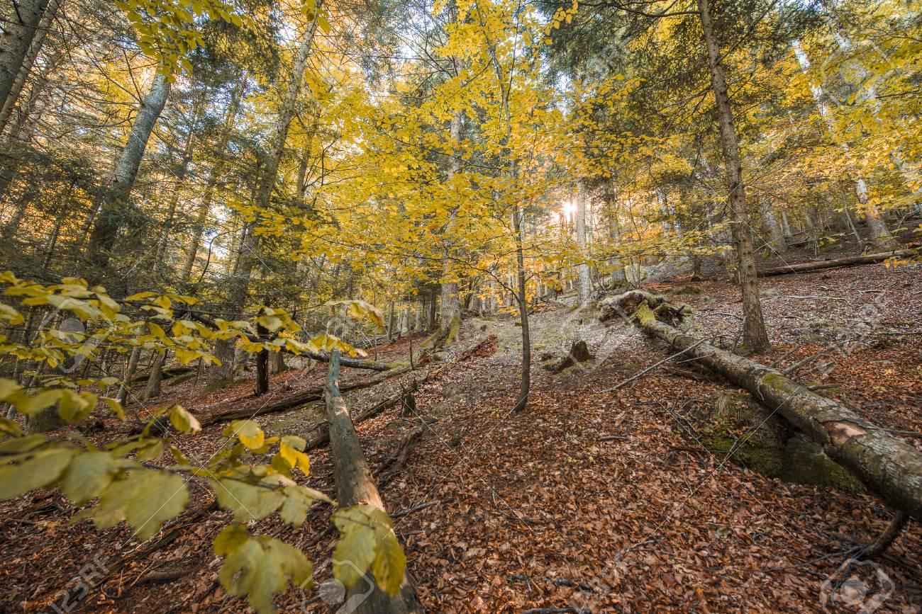 Sfeer en de kleuren van de herfst op het hout in italië royalty