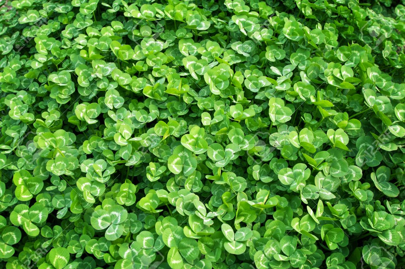 Green grass background Stock Photo - 13569882