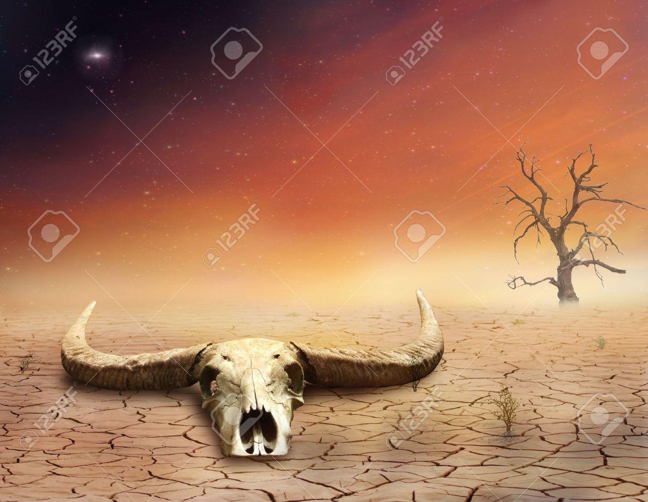Bull skull in the desert - 27613751