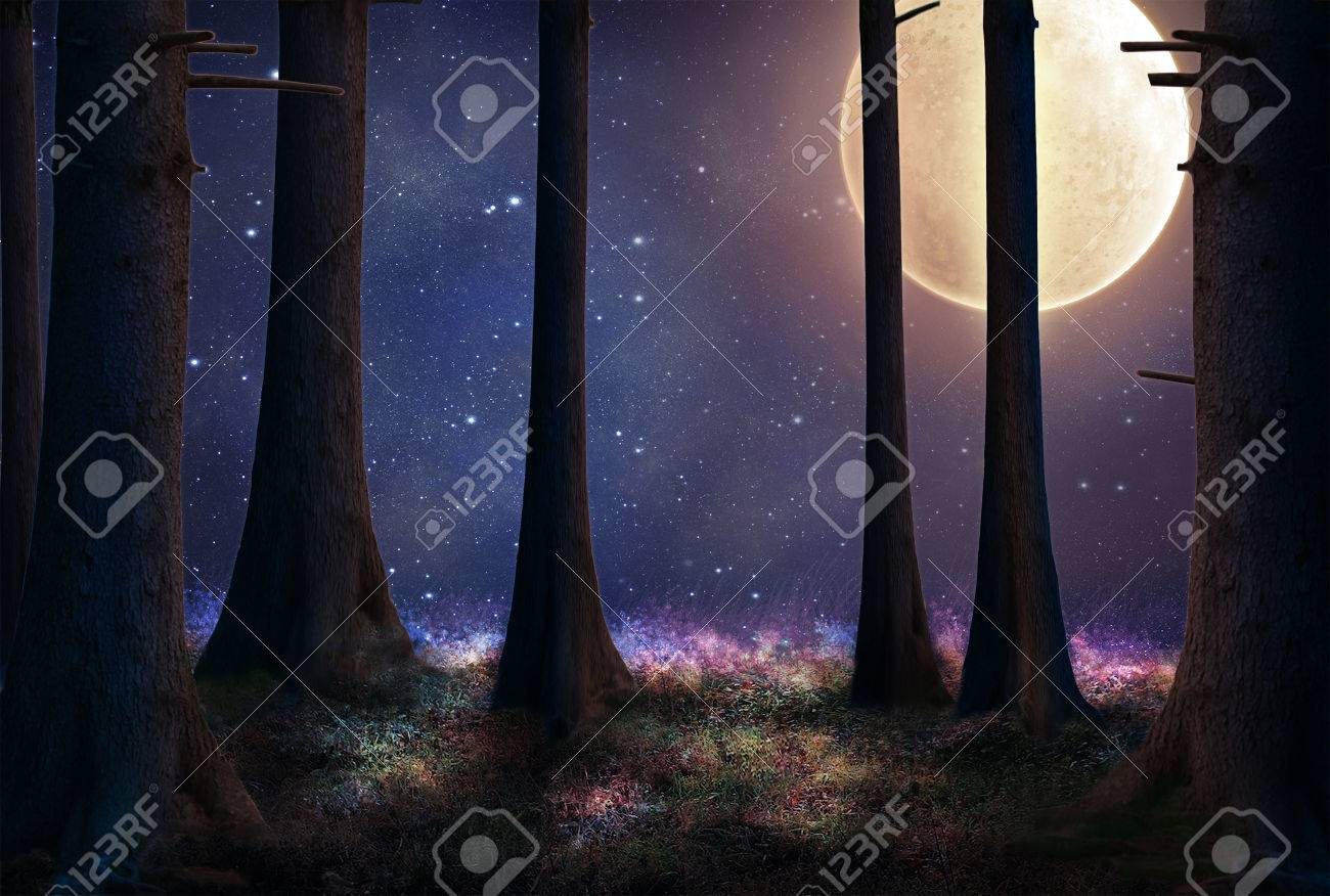 tall trees of a forest illuminated with a big full moon - 35597883