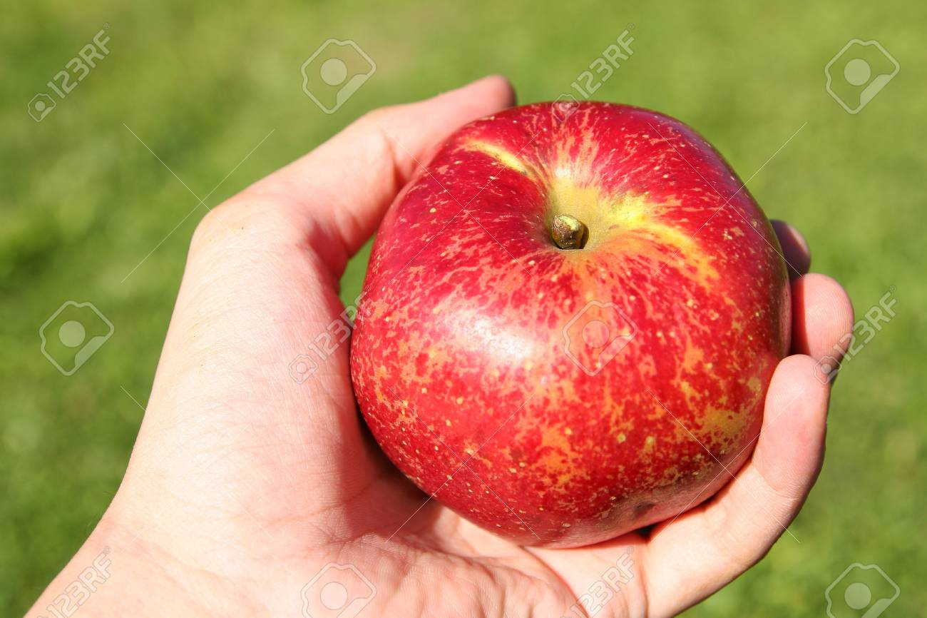 Apple in a hand Stock Photo - 14517861