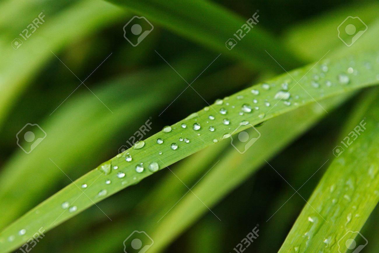 Dew drop on a leaf Stock Photo - 16991964