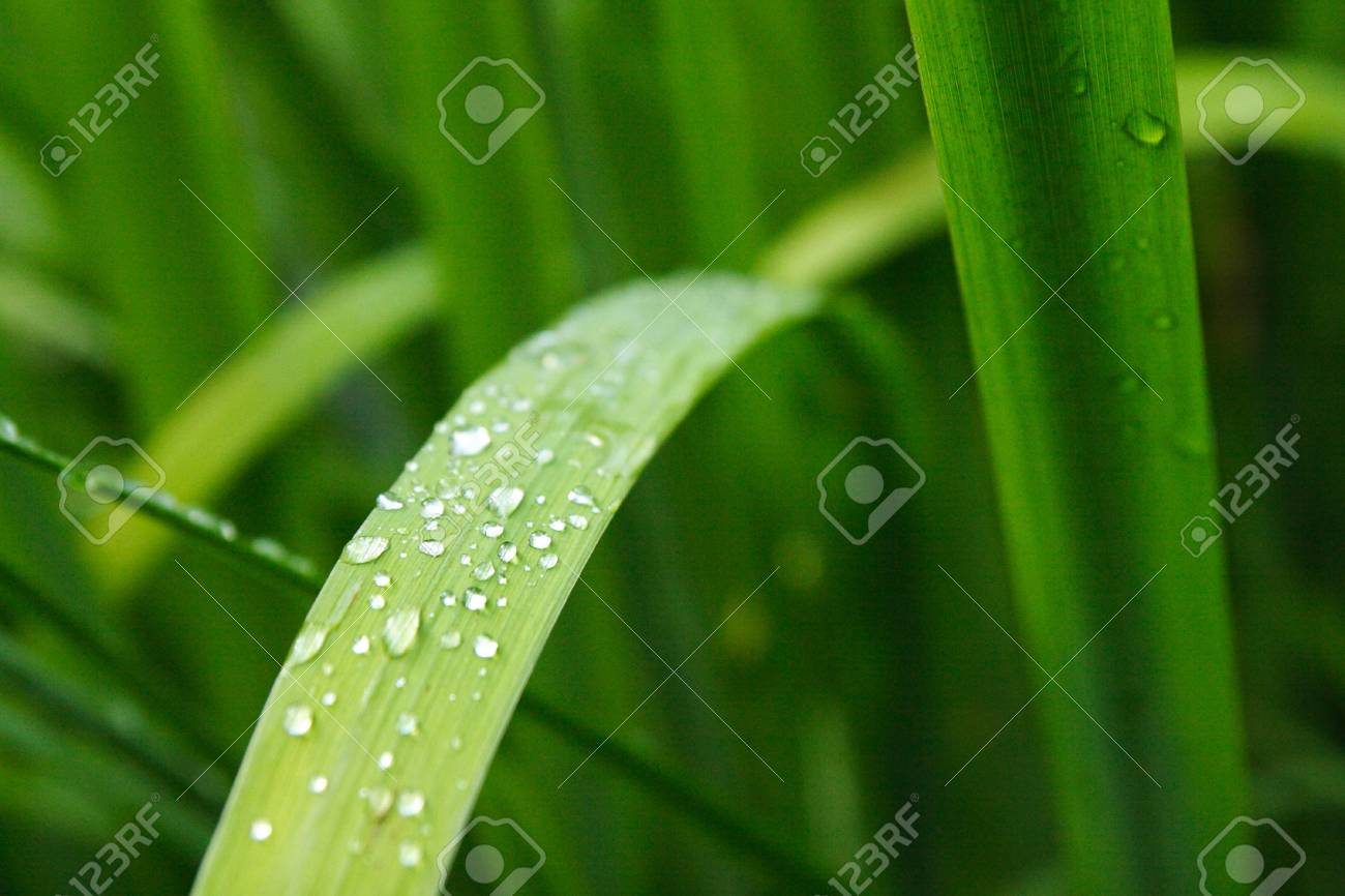 Dew drop on a leaf Stock Photo - 16991959